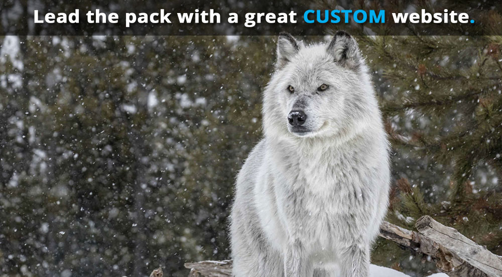 photo (for laptop screens) of a pretty white wolf and the text: 'Lead the pack with a great CUSTOM website.'
