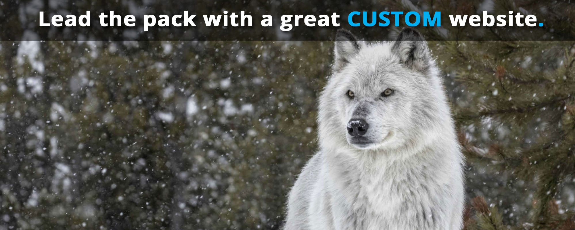 photo (for large monitors) of a pretty white wolf and the text: 'Lead the pack with a great CUSTOM website.'